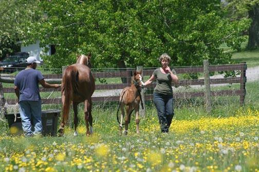Foal training