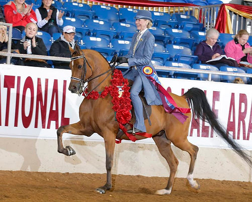 Ryan Show Horses Arabian and Half Arabian Horses-National Champion Client