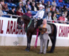 Ryan Show Horses Arabian Horses Gettysburg PA