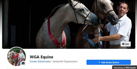 WGA Equine  for TT Wix home page.jpg