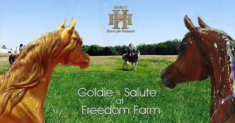 Arabian Horses For Humanity at Freedom Farm TRC MN