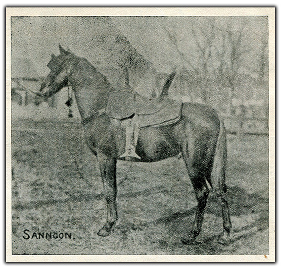 Arabian stallion Sannoon 1890