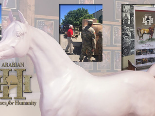 New Horse for Fort Hood, Texas!