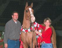 Arabian gelding - Team Troxler Equine- trainers
