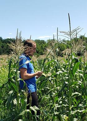 Kody checking sweet corn.jpg