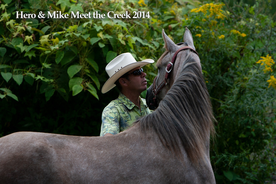 Arabian horse training with TeamTrox, Mike Troxler and Hero