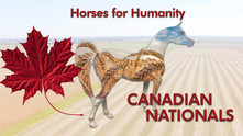Today in Brandon-The 2019 Canadian Arabian Nationals