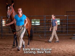 Equine Vet Shots!