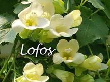 Lovely Lofos!