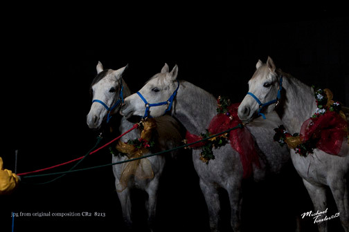 Arabian mares Vixen, Peaches and Rella-by Mike Troxler-New York