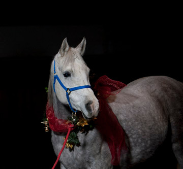 Holiday Horse Pictures -Michael Troxler