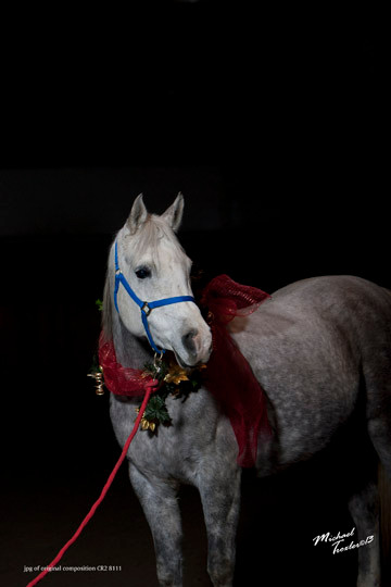 Arabian mare GJR Mishnomida photo by Mike Troxler
