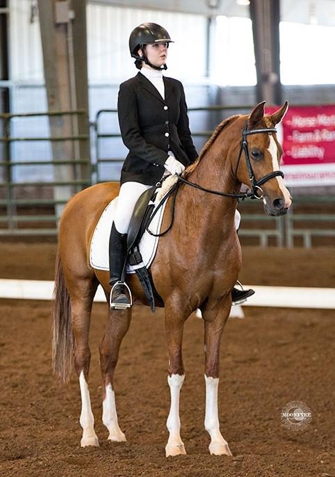 Arabian mare, Flaming Desyre trained at Platinum Performance Horses, Albuquerque NM