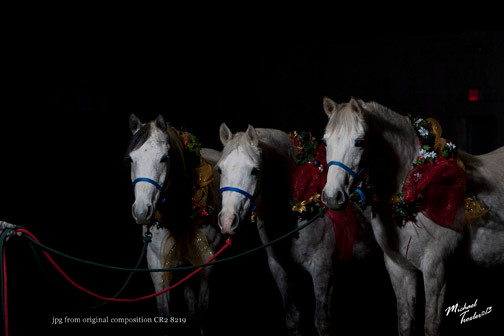 Arabian mares Vixen, Peaches and Rella by Mike Troxler New York