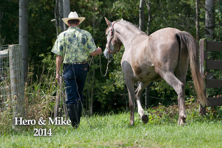 Horse training with Arabian gelding Hero BF and Mike Troxler