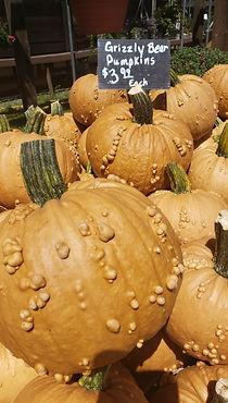 Grizz pumpkins.jpg