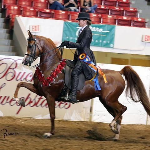 Arabian Mare Goldd Starr and PA Arabian trainer Christine Ryan
