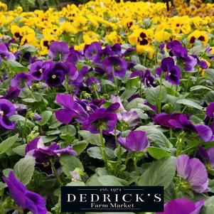 2021 Dedricks spring summer plants 3.jpg