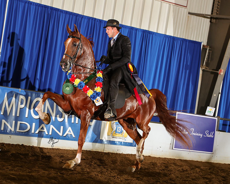 Region 13 Half Arabian English Pleasure Junior Horse Champion, Helluva Storm LR, photo by Jeff Janson
