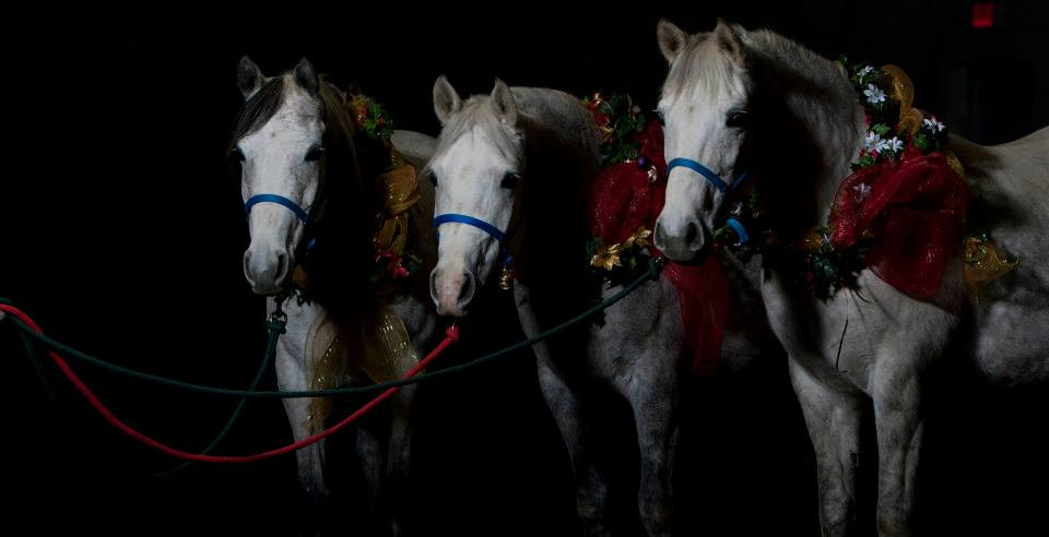 Final image Arabian mares Julianna BF, GJR Mishnomida and GJR Bella Cinderalla by Mike Troxler New York