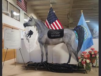 Arabian Horse for Humanity: Saber
