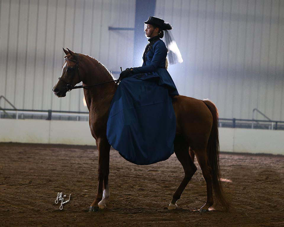 Region 13 Championship Show Side Saddle Open Class Photo by Mike Troxler for Jeff Janson Photography