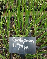 Plant Nursery near Ithaca