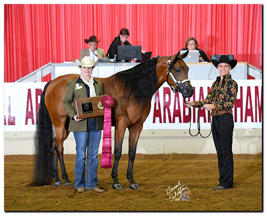 SW Arezzana and Leanne Boger Mosely Arabian Nationals 2016