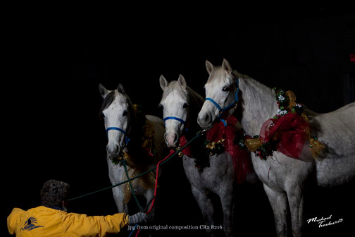 Arabian mares-Vixen, Peaches and Rella-by Mike Troxler New York