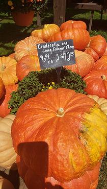 Cinderella pumpkins.jpg