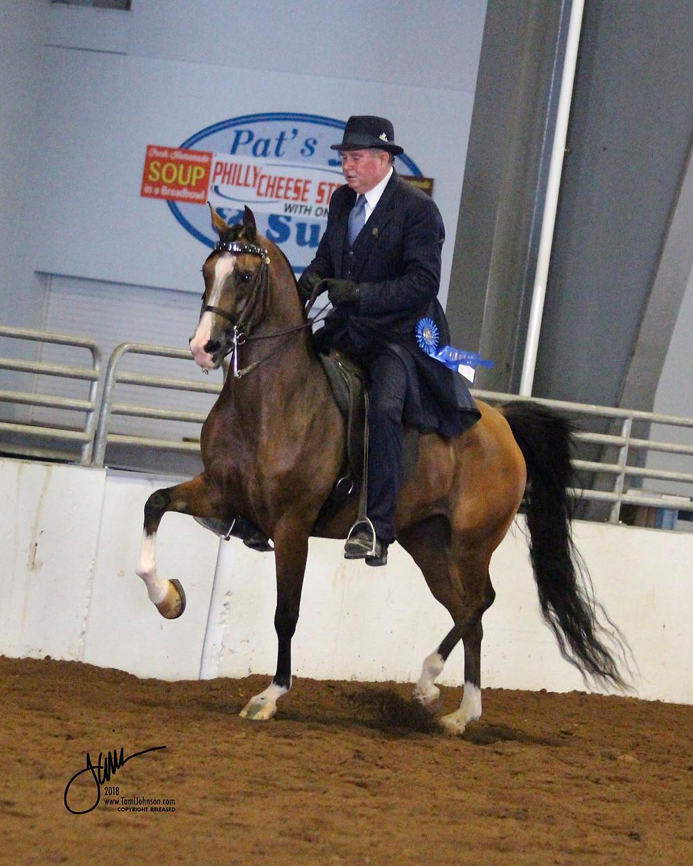 Arabian mare Flawlezz by Vegaz and PA Arabian trainer Johnny Ryan