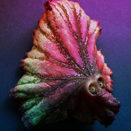 feuille dragon pouledog ink.jpg