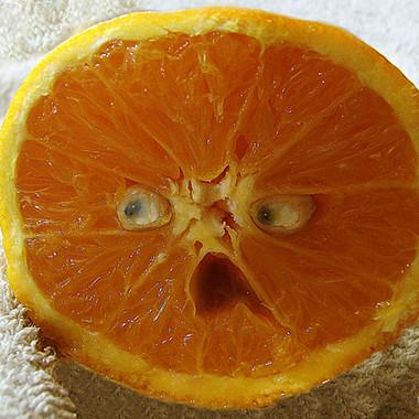 orange O pouledog ink.jpg