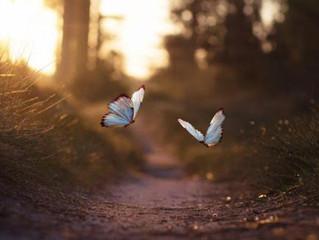 La nature, source d'amour inconditionnel