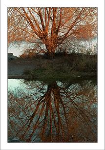 DSCN1087Tree-Reflect-1_WIX.png