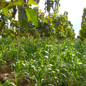 Food Security; A Key Pillar of Sustainable Development