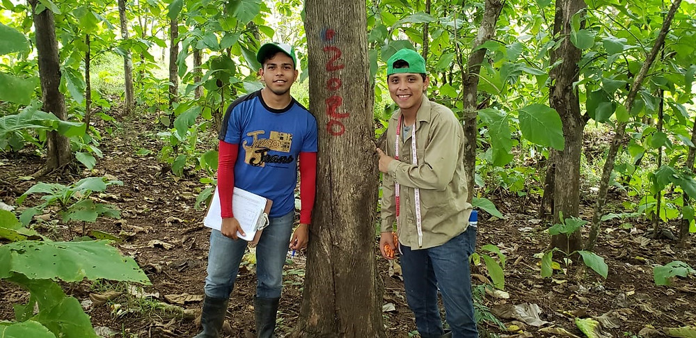 A couple of Nicaforest interns pose next to a teak tree after a day working in the field as part of the internship program.
