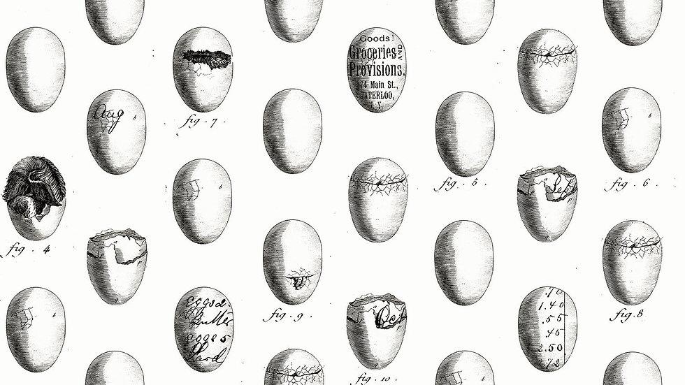 Quilting Treasures- Fowl Play 26468-E White Eggs