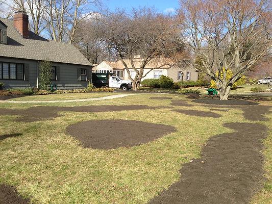 Lawn Disease Treatment NJ