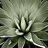 floral8.jpg
