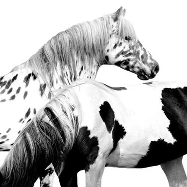 animals10.jpg