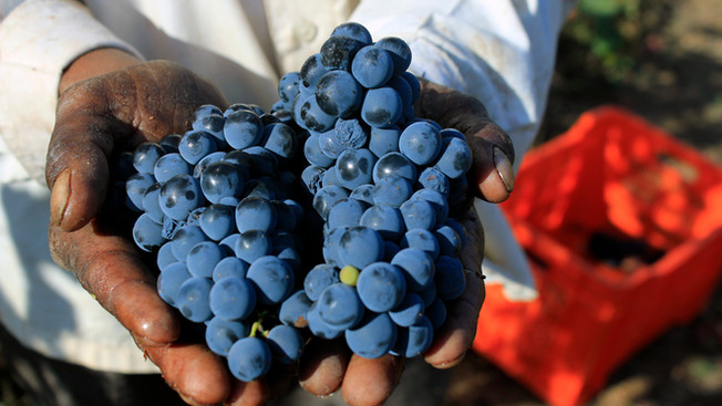 Wine's Final Frontier? Discovering the Wines of India