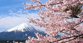 japan mt fuji sakura.jpg