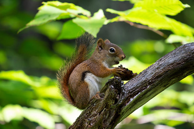 nature-animals-squirrel-trees-1564292.jp