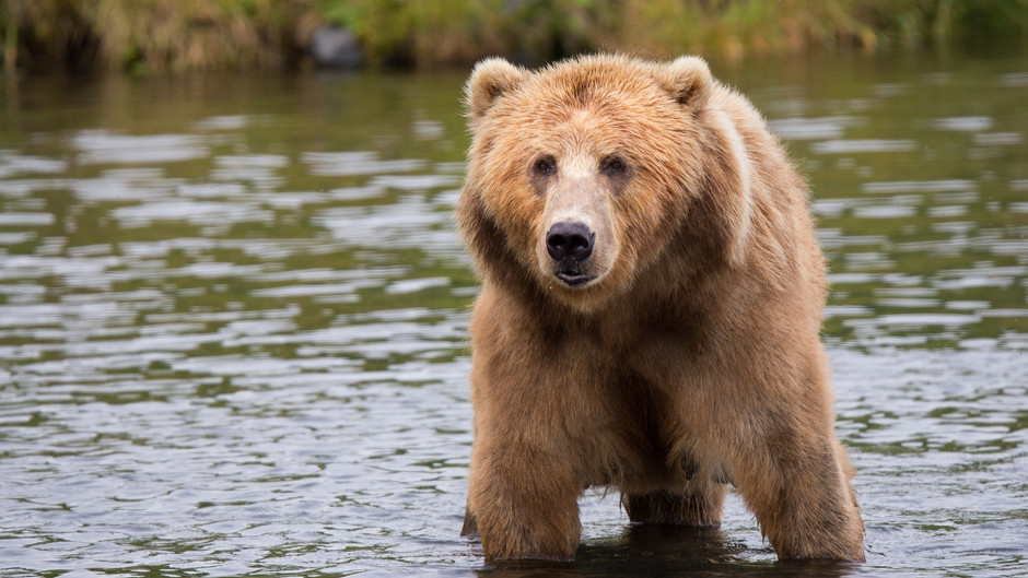 Summer 2020: South Rockies Grizzly Bear Project
