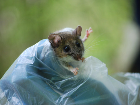 Summer 2019: Algonquin Small Mammal Project