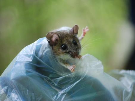 Summer 2019: Algonquin Small Mammal Project