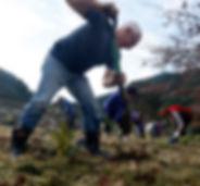 rotary planting7.jpg