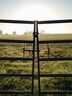 old-gray-metal-gate-on-lush-grass-field-