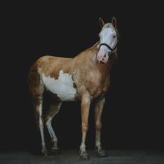 Fine Art Black Background Paint Horse
